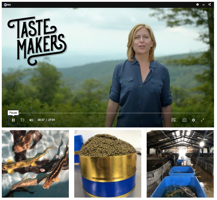 Marshallberg Farm was featured on season 2 of TasteMAKERS. This episode is currently airing on PBS and can also be seen online here: https://www.watchtastemakers.com/206-marshallberg-farm