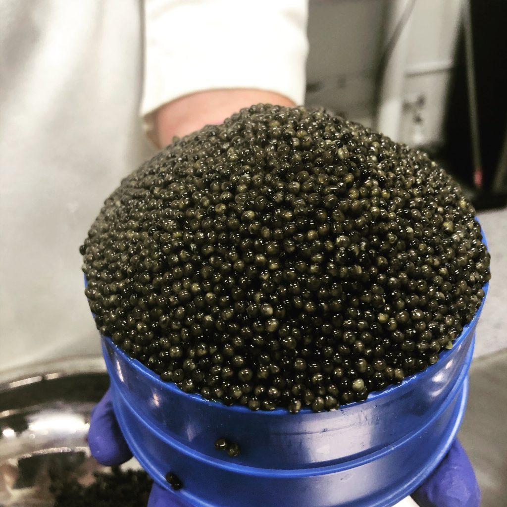 freshest-caviar
